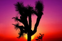 Image of desert sunset in Pahrump